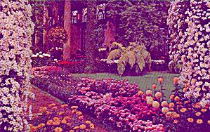 Main Consrevatory Chrysanthemums Longwood Gardens PA P39591 (Image1)