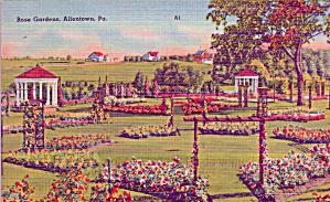 Allentown Pennsylvania Rose garden p39685 (Image1)