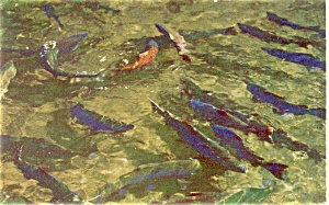 Chinook Salmon Cascade Locks Postcard (Image1)