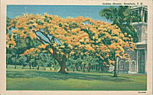 Honolulu Hawaii Golden Shower Tree in Bloom p39955 (Image1)