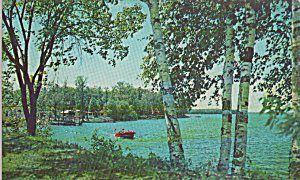 Lake Scene Framed by Birch Trees Postcard P40378 (Image1)