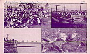 Pymatuming Lake Pennsylvania At the Spillway P40537 (Image1)