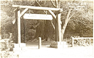 Entrance Muir Woods CA Postcard Real Photo (Image1)