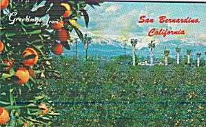 San Bernardino California Oranges Palm Trees Postcard P41163 (Image1)