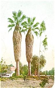Twin Palms, Pasedena CA Postcard (Image1)
