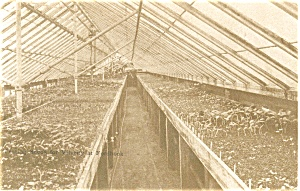 Antique Greenhouse Interior Postcard