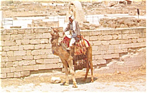 Hisham Palace Jericho Israel Postcard p4511 (Image1)