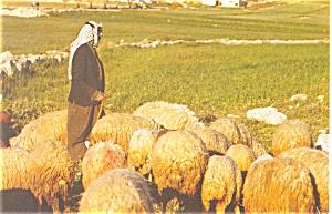 Bethlehem Israel Shepherd Postcard p4541 (Image1)