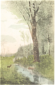 Scenic Deer at a Stream  Postcard (Image1)