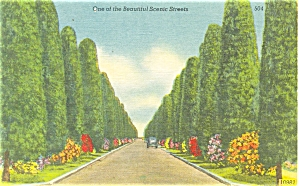 Scenic Street in Florida Postcard Linen p4727 (Image1)