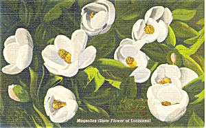 Magnolias State Flower of LA Postcard Linen (Image1)