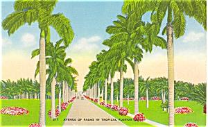 Avenue of Palms Florida Postcard p5098 (Image1)