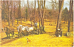 Maple Sugaring In Vermont Postcard P5863