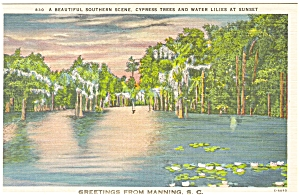 Manning SC Cypress Trees Linen Postcard p5914 (Image1)