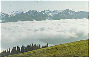 Mt Olympus, WA, Olympus National Park Postcard (Image1)