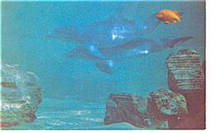 Marineland of The Pacific, Dolphins Postcard p6732 (Image1)