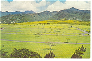 Hawaii Punchbowl Crater Cemetery Postcard p6741 (Image1)