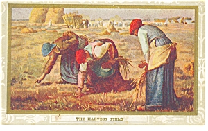 The Harvest Field Vintage Postcard p6907 (Image1)