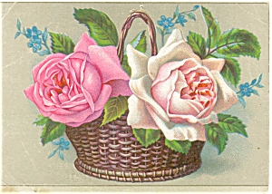 Victorian Trade Card Bee Hive Store Reading PA p7071 (Image1)
