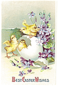 Best Easter Wishes Postcard  Chicks ca 1907 (Image1)