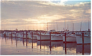 Rehoboth Beach, DE, Indian River Yacht Basin Postcard (Image1)