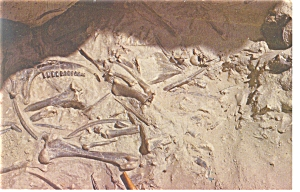 Agate Fossil Beds National Monument,NE, Postcard (Image1)