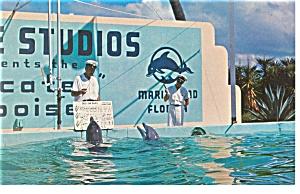 Marineland FL Trained Porpoises Postcard p7990 (Image1)