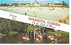Sarasota FL Lido Beach and Flamingos Postcard p8005 (Image1)