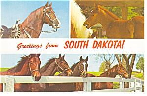 South Dakota Three Views of Horses Postcard p8049 (Image1)