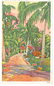 A Florida Typical Tropical Trail Postcard p8105 (Image1)