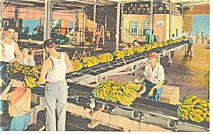 New Orleans,LA, Unloading Bananas Postcard (Image1)