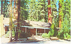 Yosemite National Park CA Big Tree Lodge Postcard p8737 (Image1)