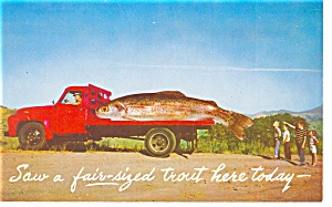 A Fair Sized Trout On A Truck Postcard P8763