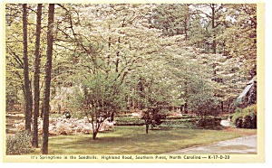 Southern Pines Nc Springtime In Sandhills Postcard P8783