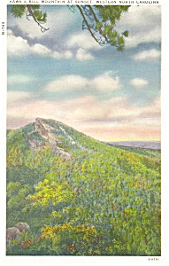 Hawk s Bill Mountain NC  Postcard p8787 (Image1)