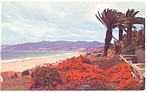 Flower Covered Palisades, Santa Monica, CA,  Postcard (Image1)