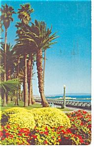 Santa Monica, CA, Palisades Park,  Postcard (Image1)