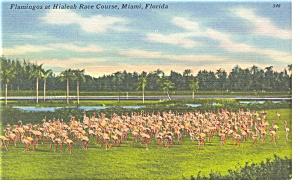 Miami FL Hialeah Race Course Linen Postcard p9030 (Image1)