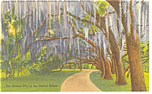 St Augustine Fl Oldest Orange Grove Linen Postcard P9034
