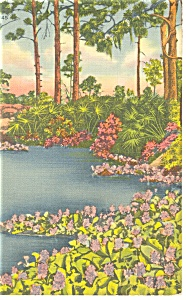 Hyacinth Pool in Florida Postcard (Image1)