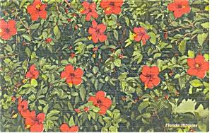 Hibiscus in Florida Linen Postcard (Image1)