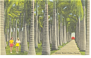 Royal Palms at McKee Jungle Gardens  FL Linen Postcard p9080 (Image1)