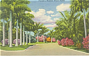 Florida's Majestic Royal Palms Linen Postcard (Image1)