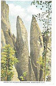 Among The Needles, Black Hills, SD Postcard (Image1)