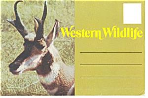 Western Wildlife Souvenir Folder sf0125 (Image1)