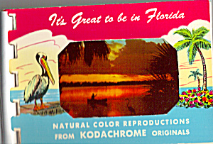 Its Great To Be In Florida Souvenir Folder Sf0484