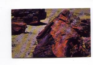 Petrified Forest Arizonia Postcard t0088 (Image1)