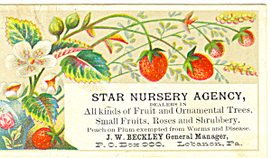 Star Nursery Agency Trade  Card tc0009 (Image1)