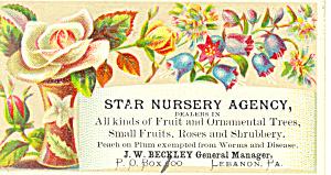 Star Nursery Agency Trade  Card tc0013 (Image1)