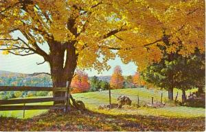 New England Fall Scenic Postcard W0754
